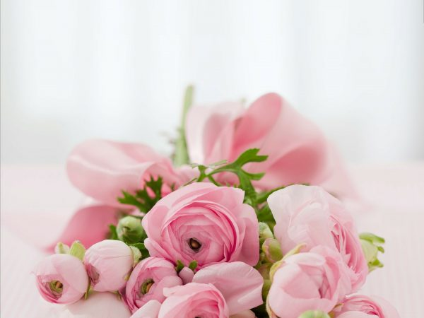 beautiful-pink-roses