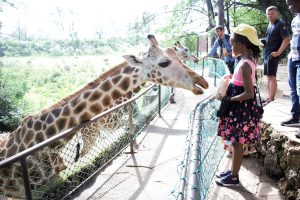 feeding-the-giraffes-at-haller-park